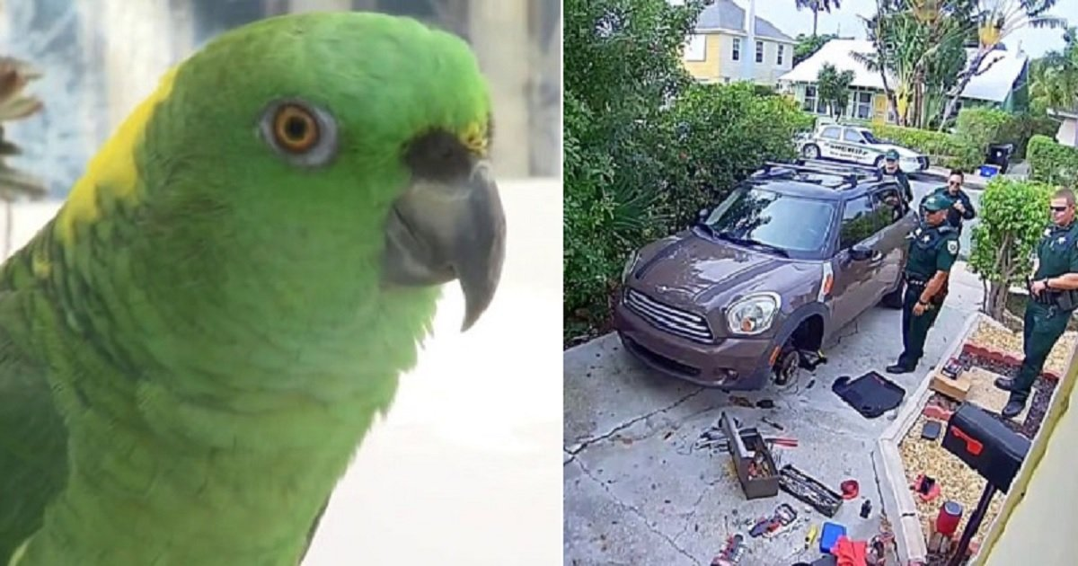 p3 2.jpg?resize=1200,630 - A Parrot That Screamed 'Let Me Out!' Had Police Show Up To His Owner's House