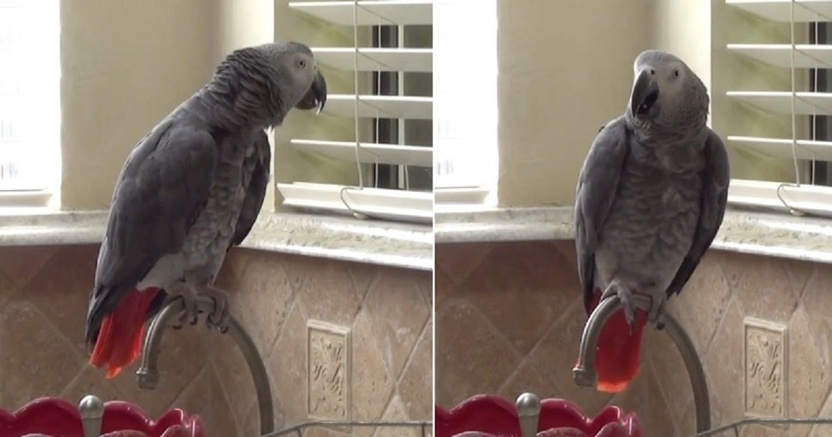 p4.jpg?resize=1200,630 - Funny Parrot Wanted To Go Out And Meet The Squirrels Outside