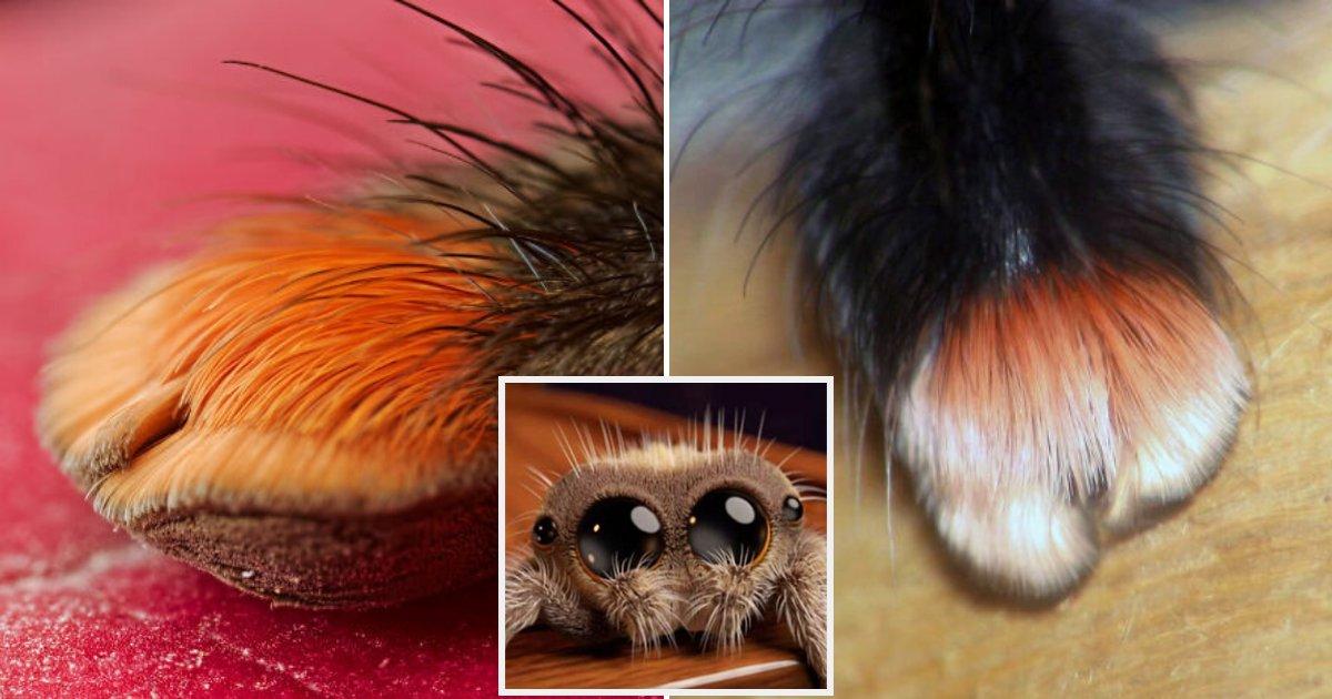paws.png?resize=412,232 - Vous avez peur des araignées ? En regardant de plus près vous allez les trouver mignonnes !