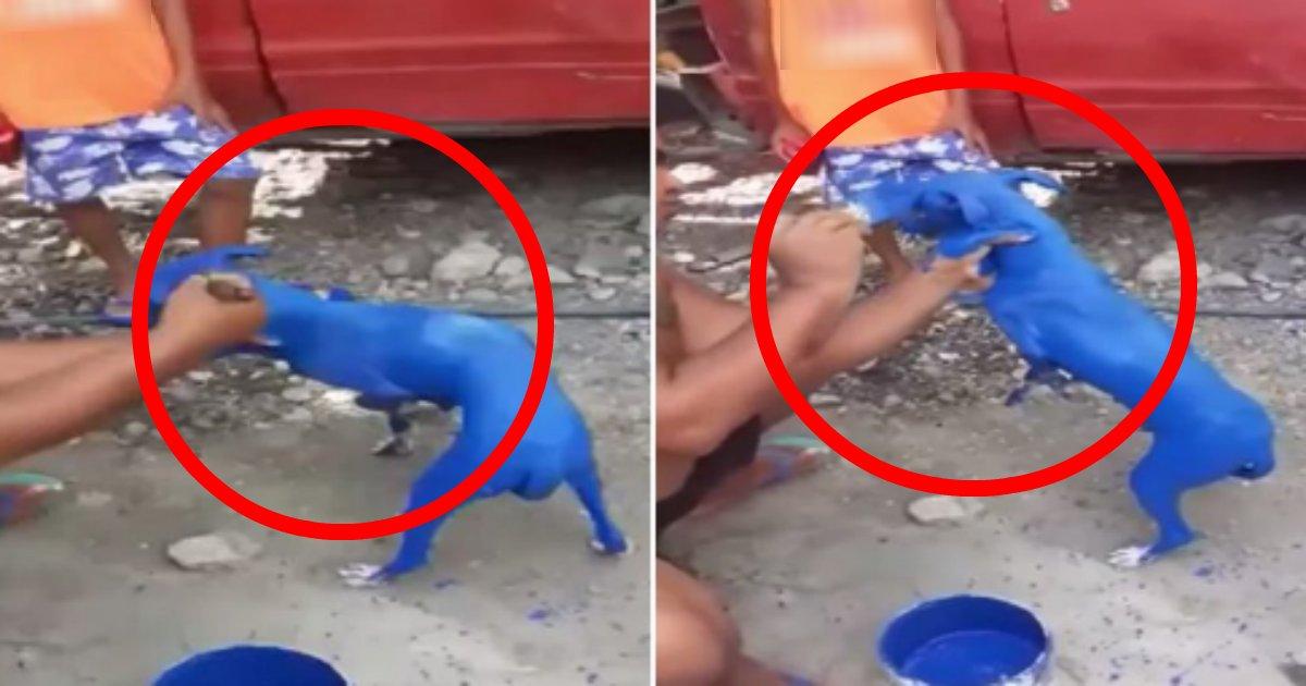penki.png?resize=1200,630 - 青のペンキで全身を塗られただ怯える飼い犬の動画が拡散され大炎上!