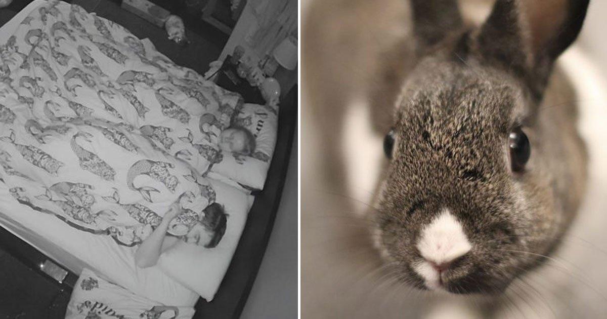 rabbit trying to wake owners up.jpg?resize=300,169 - Vidéo d'un adorable lapin essayant de réveiller ses propriétaires