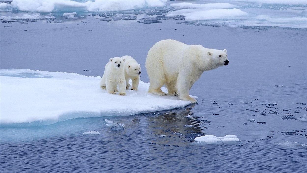 rc2.jpg?resize=412,232 - Réchauffement climatique: une source de chaleur fait fondre l'Antarctique par en dessous