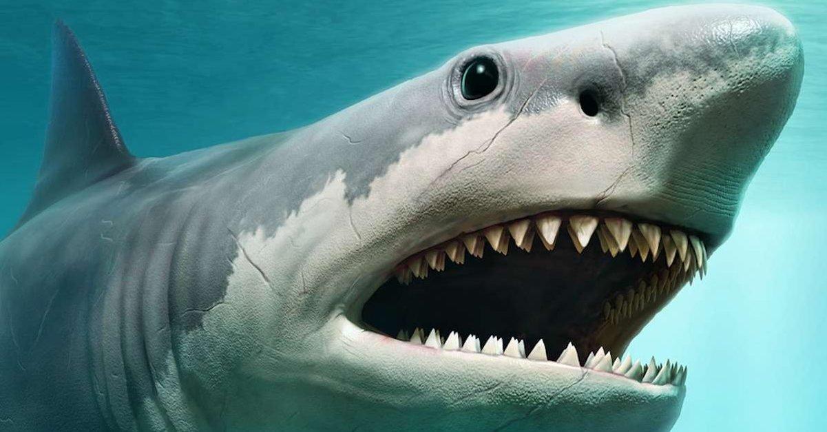 requin e1579887645125.jpg?resize=412,232 - Australie: Il retrouve le corps sans tête d'un requin de 100kg mordu par une créature encore plus grosse