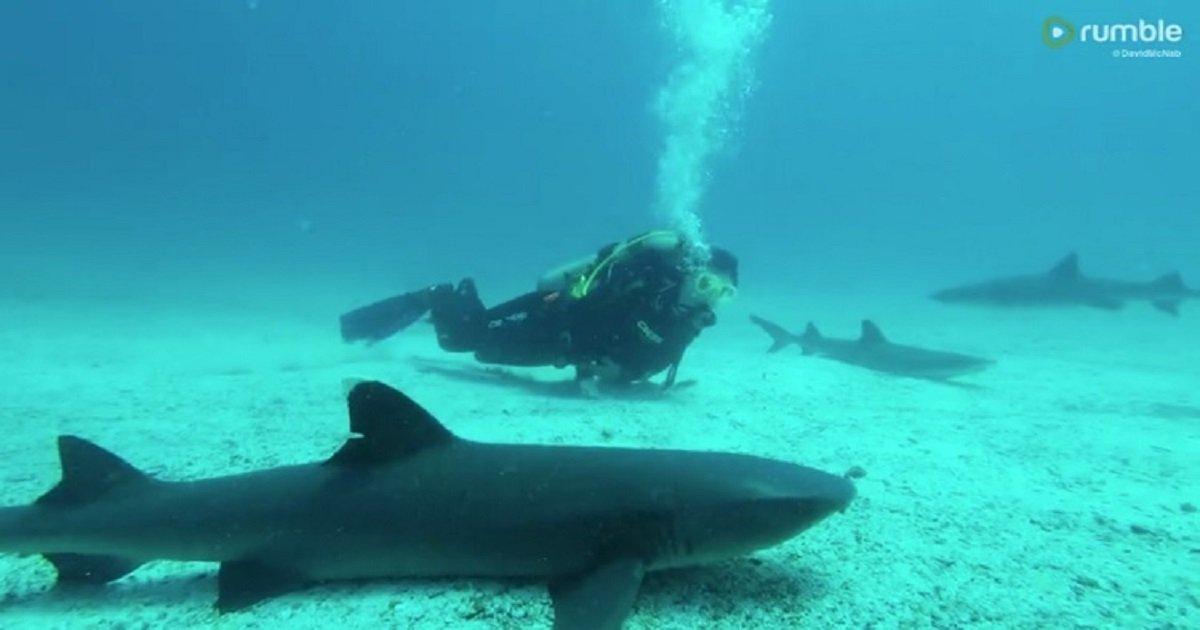 s3 12.jpg?resize=1200,630 - Scuba Divers Fearlessly Swam Among Sharks On The Ocean Floor