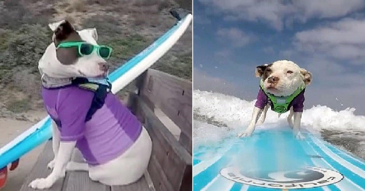 s4 2.jpg?resize=1200,630 - Adorable Rescue Dog Loves Surfing The Waves In California