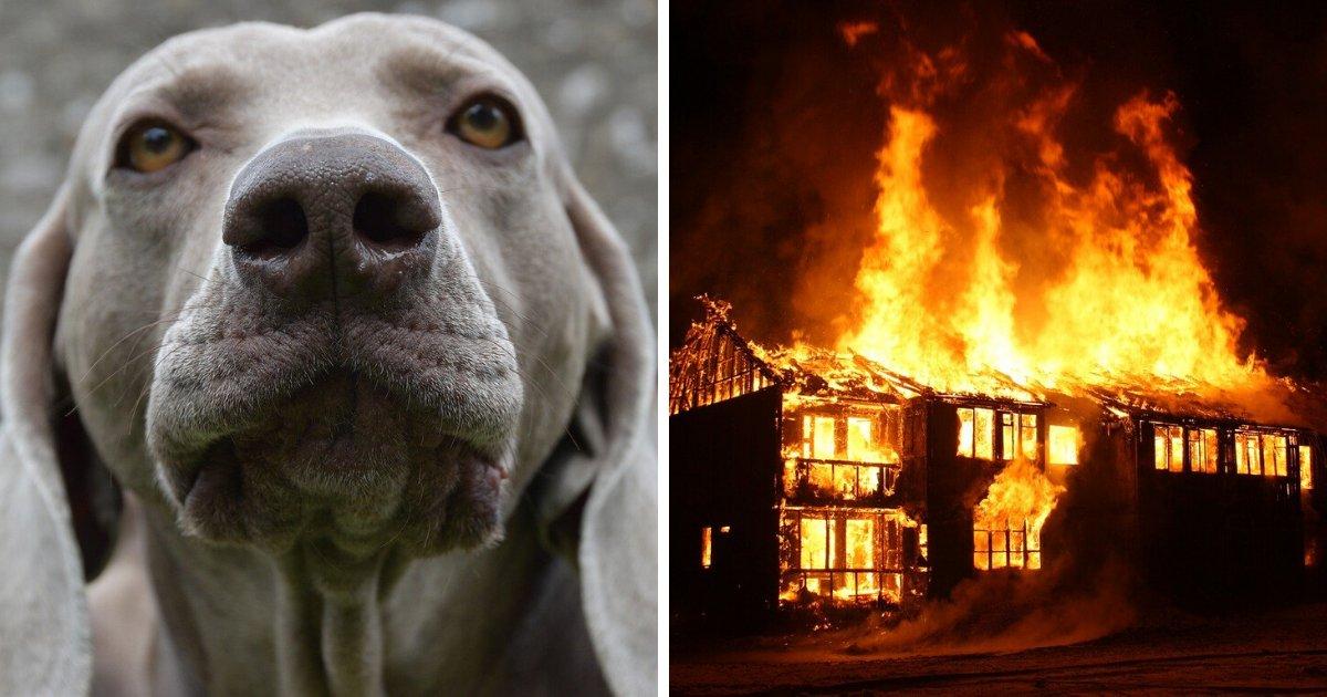 sans titre 2.png?resize=1200,630 - Grâce à ses aboiements, un chien sauve son maître d'un incendie et périt dans les flammes