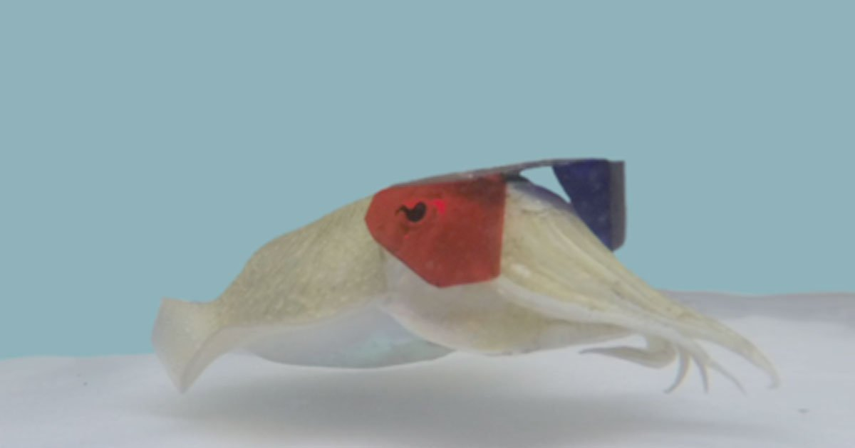 scientists were surprised by the result after putting 3d glasses on cuttlefish and showing animated images of shrimp to them.jpg?resize=1200,630 - Scientists Put 3D Glasses On Cuttlefish To Study Them