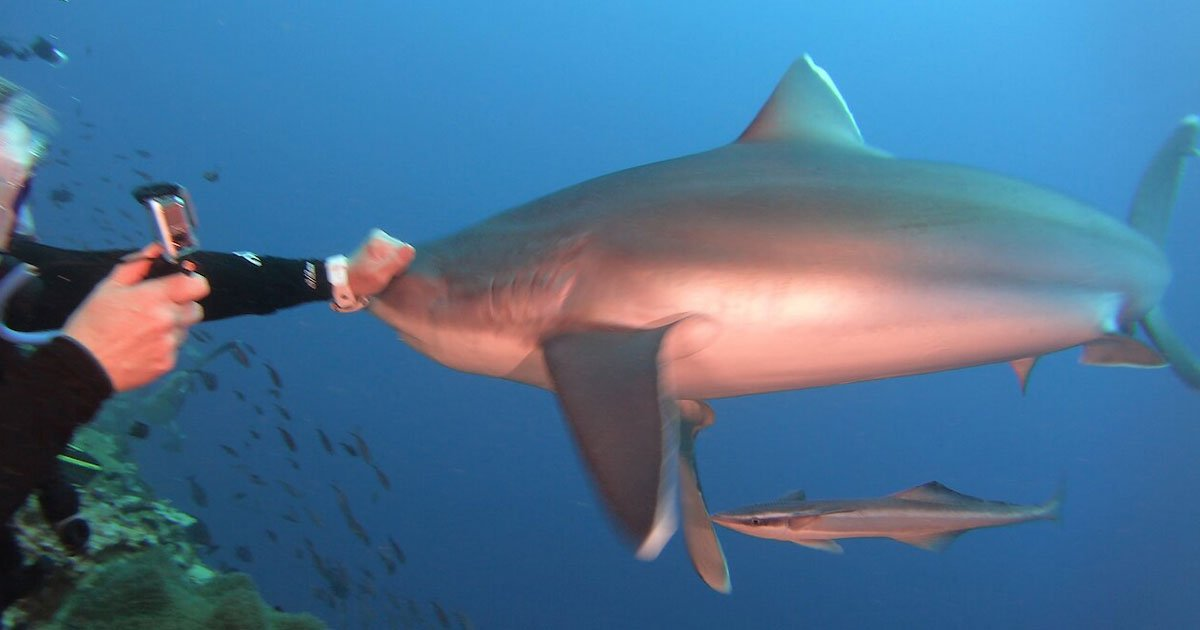 scuba diver punched shark.jpg?resize=1200,630 - Video Of A Scuba Diver Beating A Shark On Its Snout