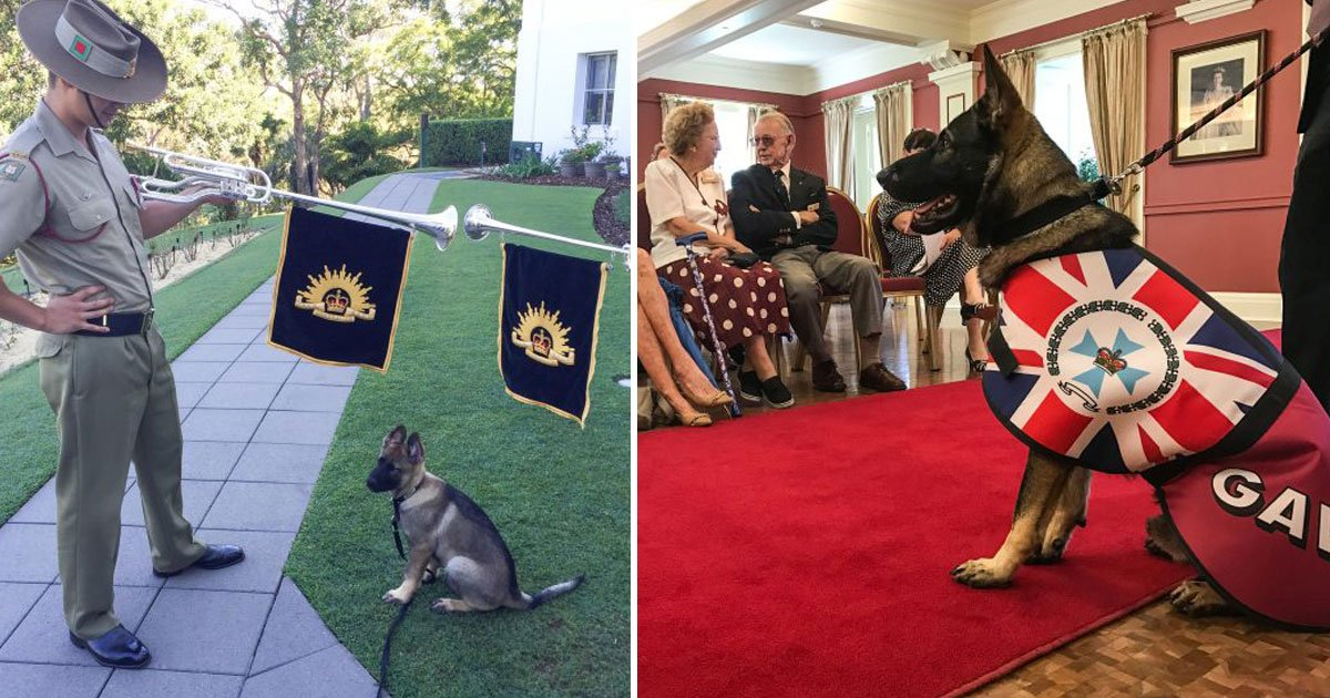 service dog.jpg?resize=1200,630 - Dog - Who Couldn't Become A Service Dog Due To His Friendly Nature - Has Now Become Governor's Official Vice-Regal Dog