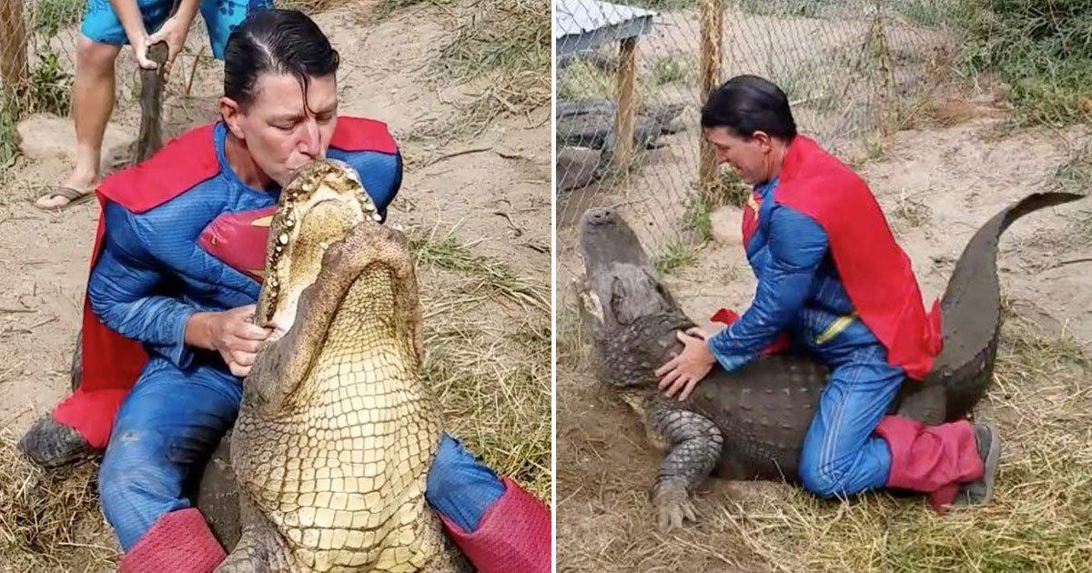 superman sitting gators back.jpg?resize=412,232 - Un homme habillé en Superman s'est assis sur le dos d'un alligator pour aider le personnel d'une ferme à ramasser ses œufs