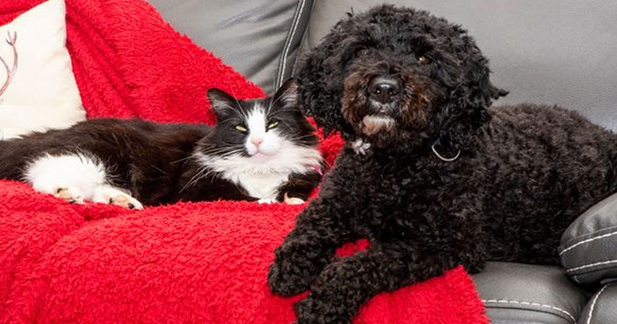 ted the dog and cat stovie are best pals who stay together like brother and sister.jpg?resize=1200,630 - Ted The Dog And Cat Stovie Are Best Pals Who Stay Together Like Brother And Sister