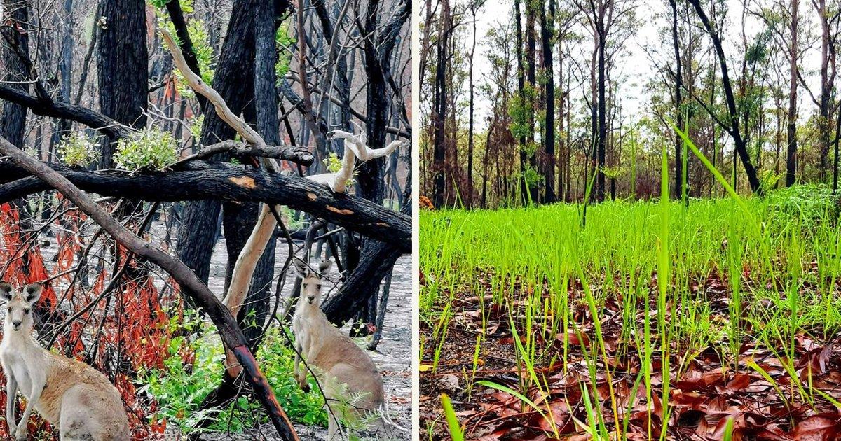 untitled 1 127.jpg?resize=1200,630 - Hopeful Photos Showing Life Slowly Returning To Scorched Lands In Australia
