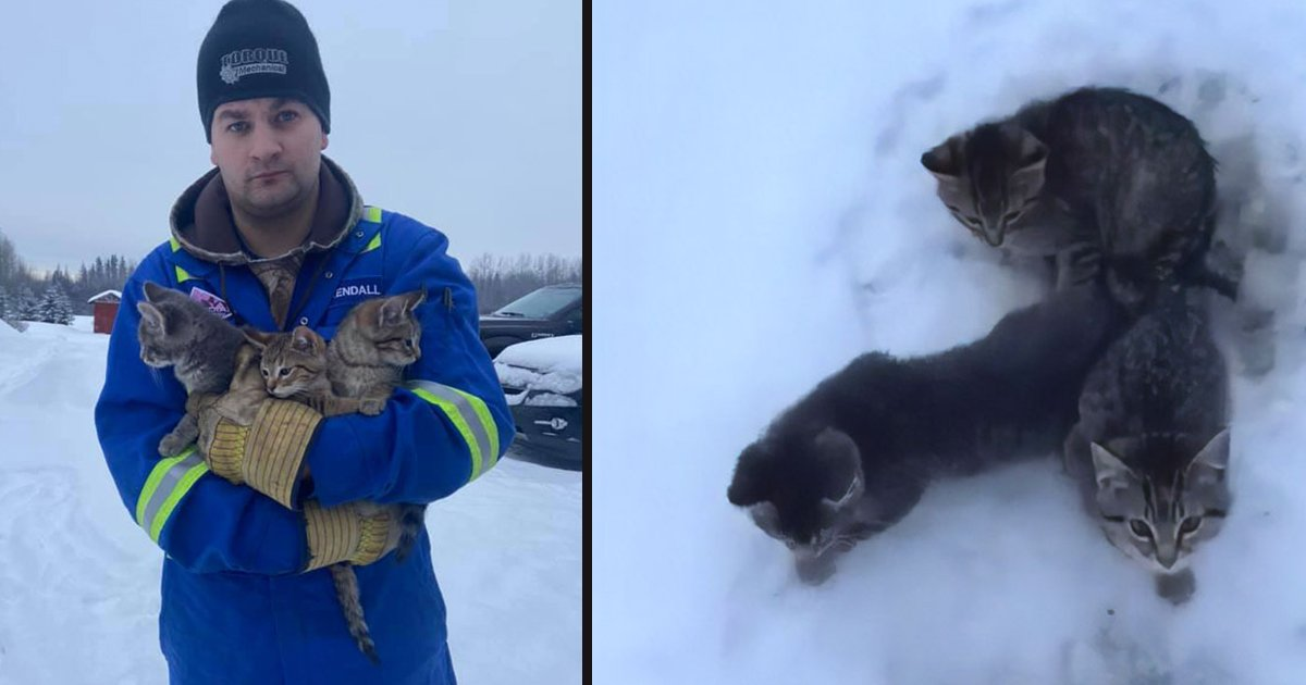 untitled 1 133.jpg?resize=1200,630 - A Man Used His Warm Coffee To Rescue Three Kittens Stuck In Snow