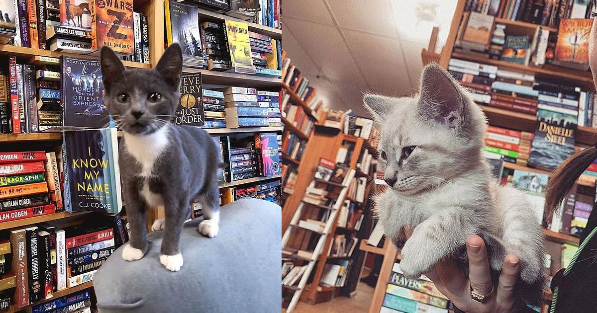 untitled 1 138.jpg?resize=1200,630 - A Bookstore Helps Rescue Cats Get Adopted By Letting Them Roam The Stacks And Cuddle With Customers
