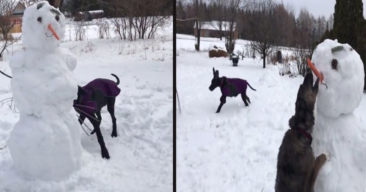 untitled 1 144.jpg?resize=1200,630 - A 5-Month-Old Puppy Made It Impossible For The Family To Build A Snowman