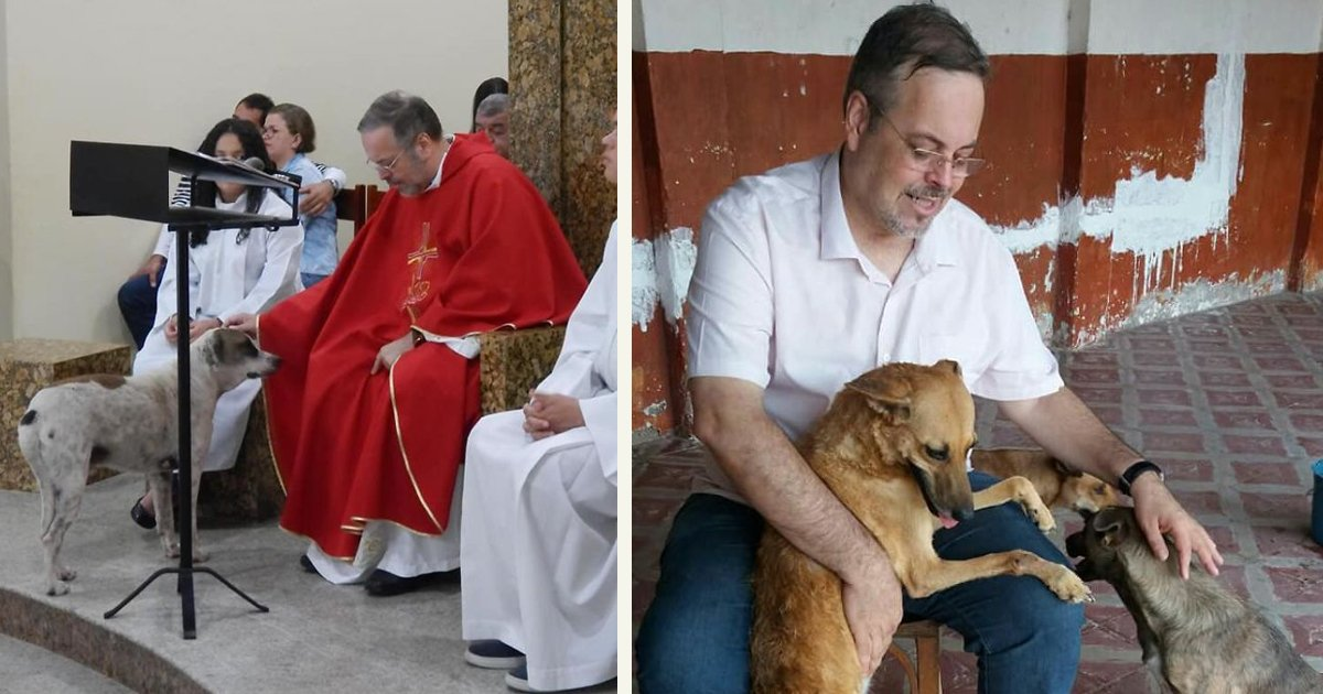 untitled 1 83.jpg?resize=412,232 - A Kind Priest Lets Stray Dogs Become Part Of His Service So They Can Find New Families