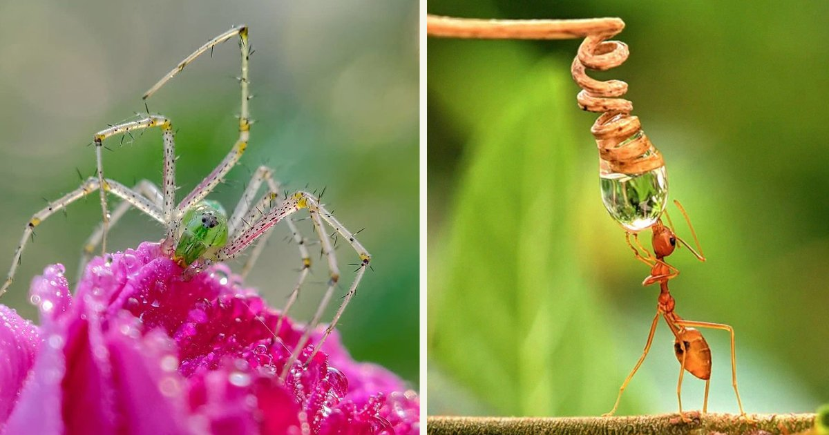 untitled 1 91.jpg?resize=1200,630 - A Man Took Incredible Macro Pictures Of Insects By Using Only His Smartphone