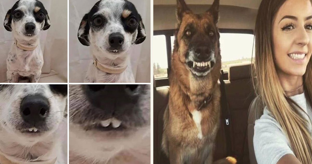 untitled 1 98.jpg?resize=1200,630 - People Shared Photos Of Their Dogs Showing Their Teeth In A Funny Way