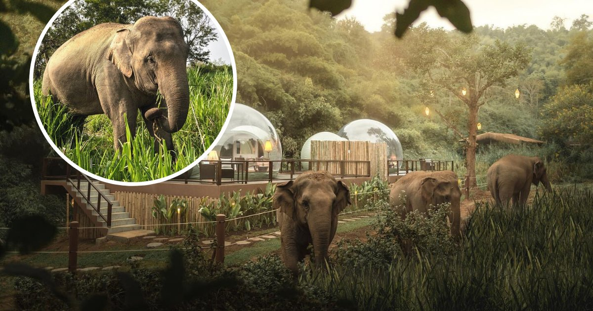 untitled design 39 2.png?resize=1200,630 - Jungle Resort Where You Can Sleep In Transparent Domes Surrounded By Elephants And Nature