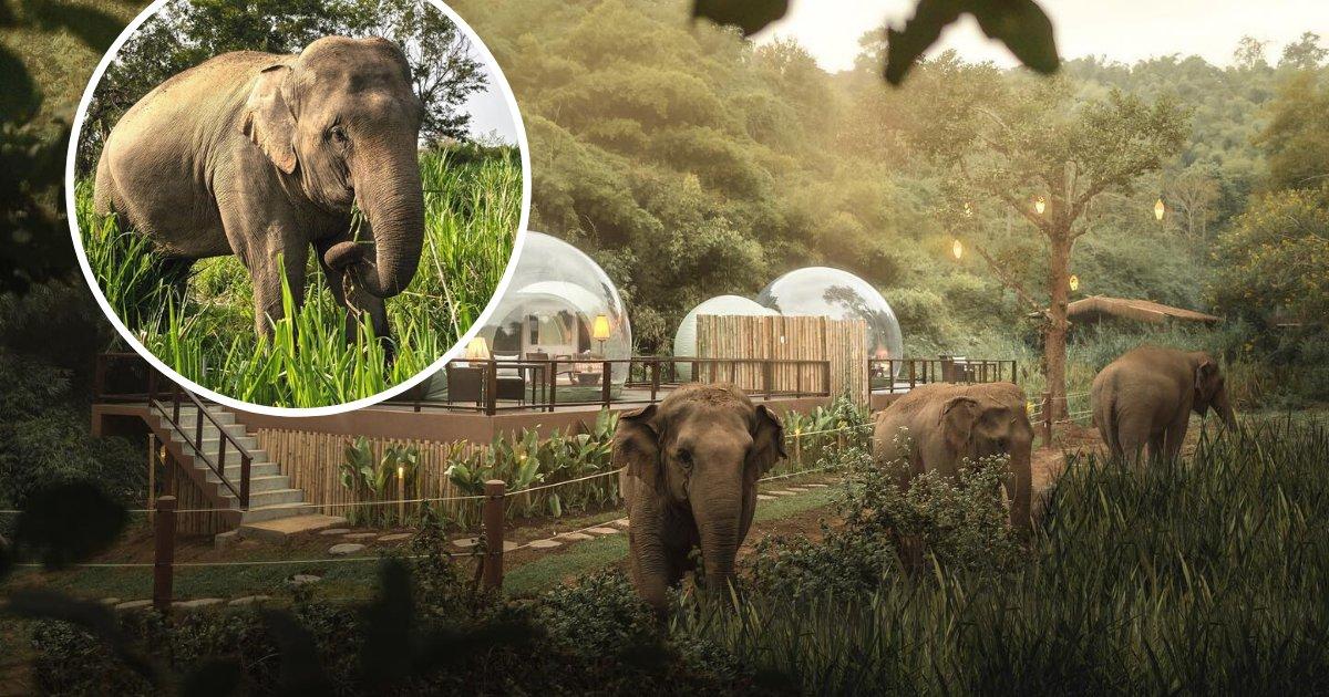 untitled design 39 2.png?resize=300,169 - En Thaïlande, vous pouvez dormir entouré d'éléphants dans la jungle !