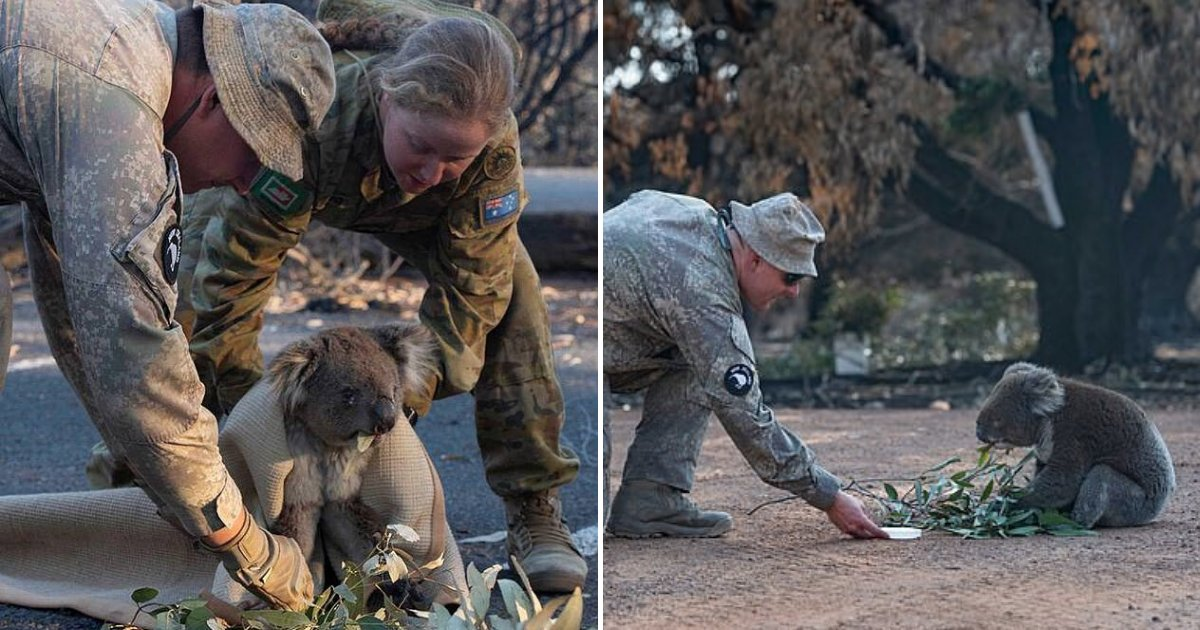 untitled design 43 1.png?resize=1200,630 - Heartbreaking Moment Soldiers Comforted Upset Koala And Wrapped It In A Blanket