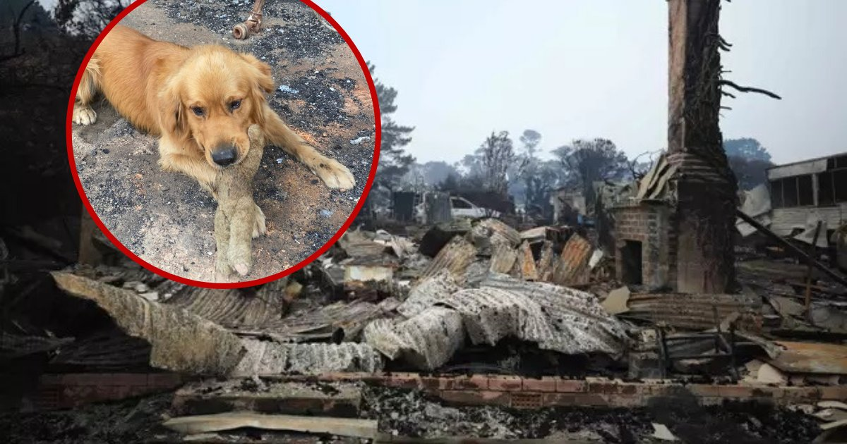 untitled design 46 1.png?resize=1200,630 - Dog Found His Favorite Toy In Rubble After Family Home Burned Down In Flames