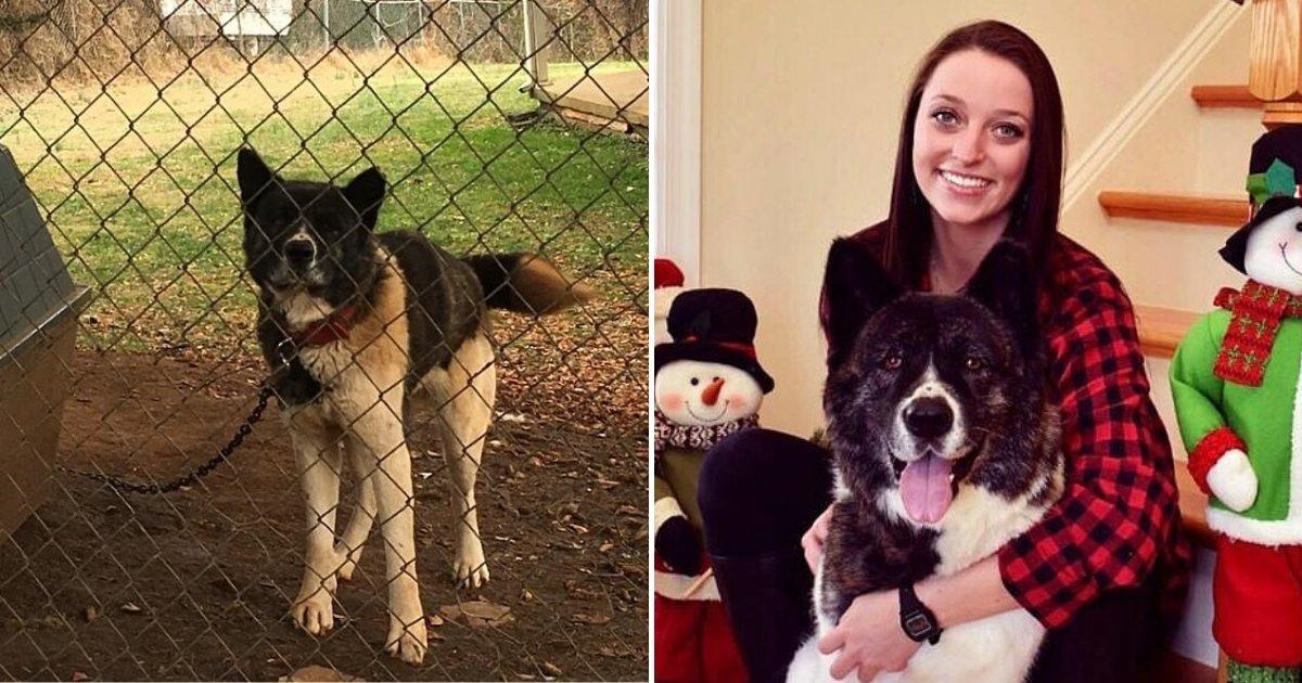 untitled design 52.png?resize=412,275 - Une femme qui a nourri un chien négligé pendant plus d'un an a finalement été autorisée à adopter le chien