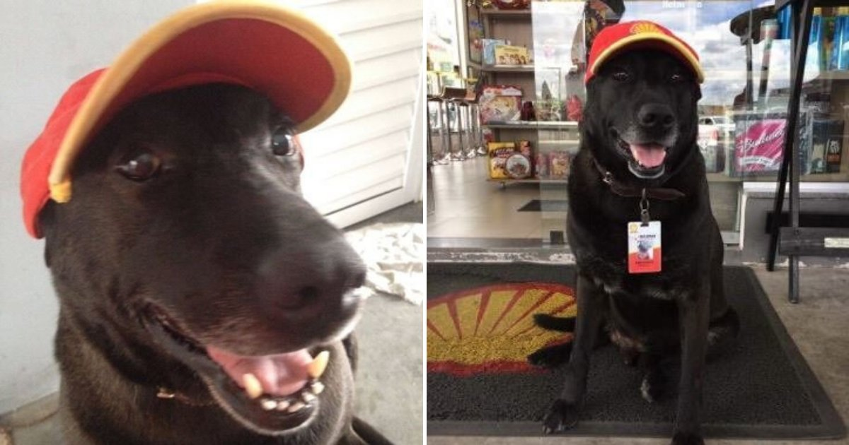 untitled design 55.png?resize=412,232 - Abandoned Dog Adopted By Gas Station And Hired As Their Greeter