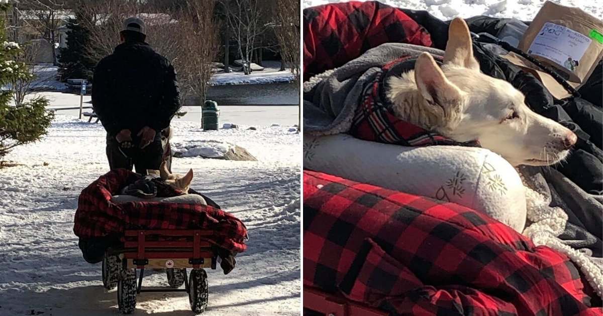 untitled design 74 1.png?resize=412,232 - Man Built A Special Cart For His Disabled Dog So That He Could Take Her On Walks