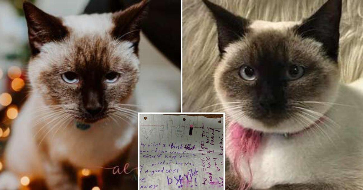 untitled design 79 1.png?resize=412,232 - Un chat bien entretenu a été trouvé dans la rue avec une note écrite par un enfant attaché à son cou