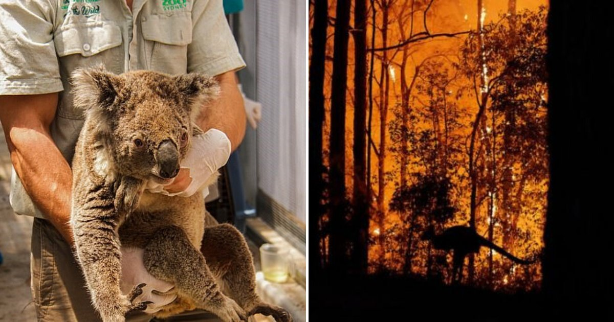 untitled design 84.png?resize=1200,630 - New Estimations Suggest Over One Billion Animals Died In Australia's Bushfires