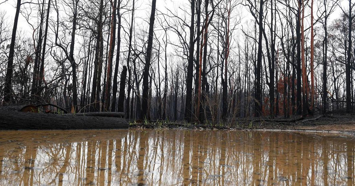 ustralia heavy rains.jpg?resize=1200,630 - Australia's Fire-Stricken East Welcomes Heavy Rains