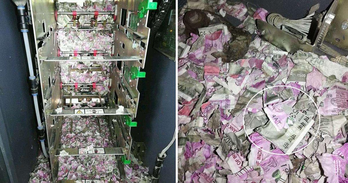 1 113.jpg?resize=1200,630 - Una Rata Masticó Casi 18.000 Dólares En Efectivo Dentro De Un Cajero Automático