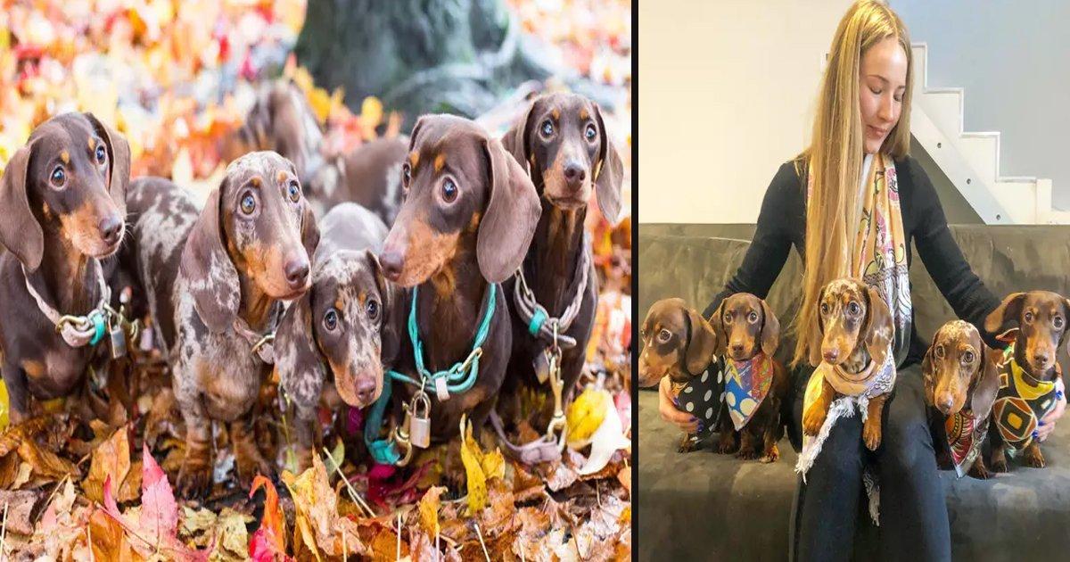 1 135.jpg?resize=1200,630 - Esta Mujer Gasta Casi $ 1,000 Dólares Al Mes En Sus Cinco Perros