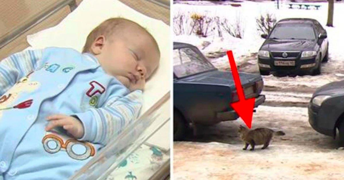 1 195.jpg?resize=1200,630 - Bebé Abandonado En El Frío Casi Muerte Hasta Que Un Gato Hizo ESTO