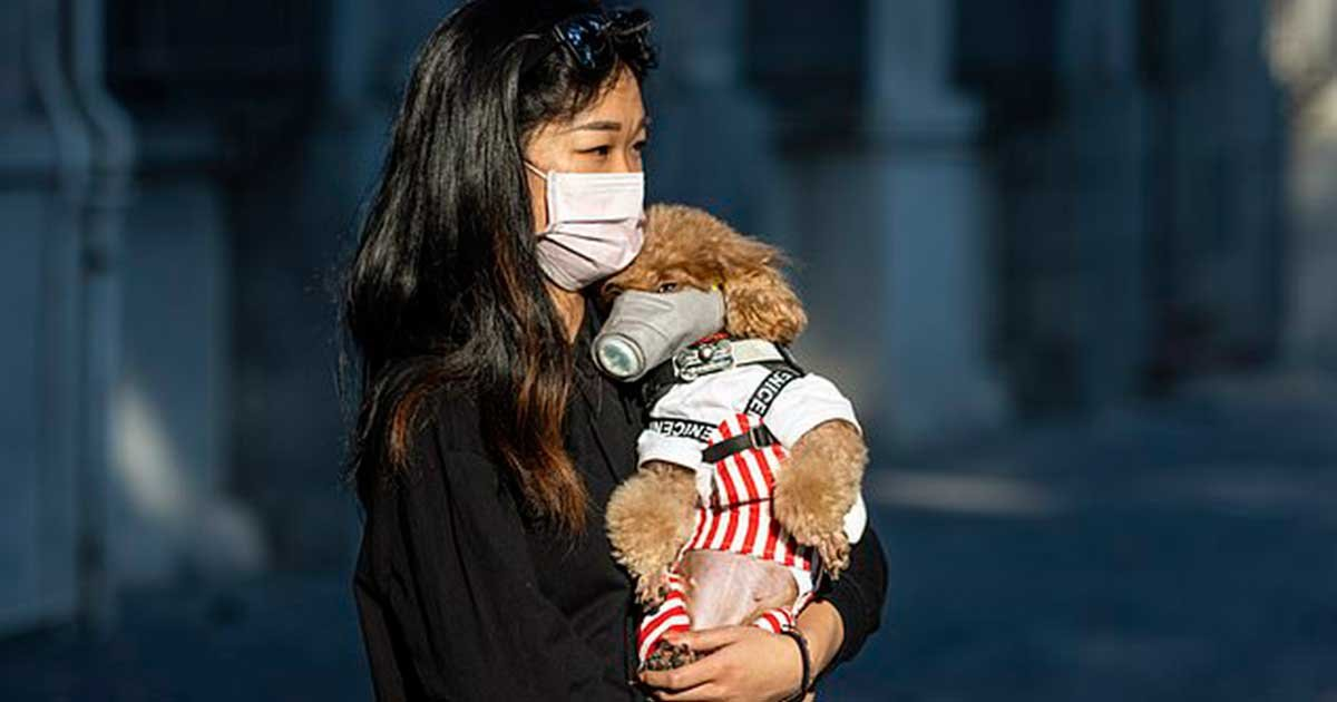 11 89.jpg?resize=1200,630 - Chinese City Pushes Law To Ban Consumption Of Dog Meat Amid Coronavirus Epidemic