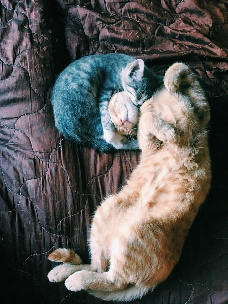 20 Pets That Have Enough Love for the Entire World