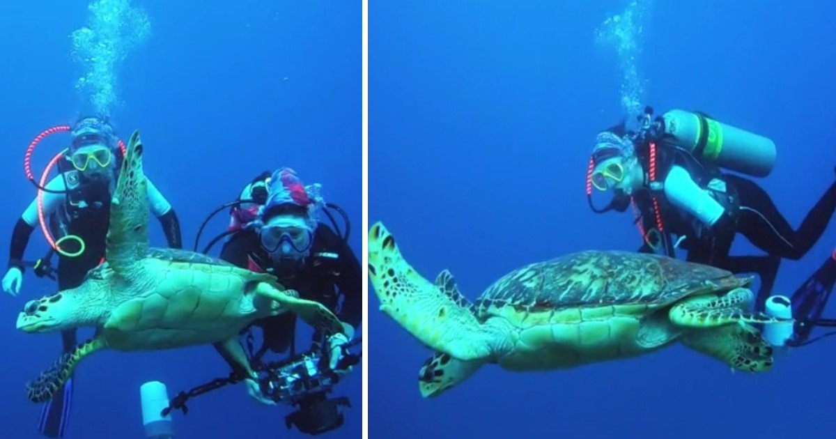 2 126.jpg?resize=412,232 - A Highly Social Sea Turtle Came Near A Scuba Diver To Have A Closer Look
