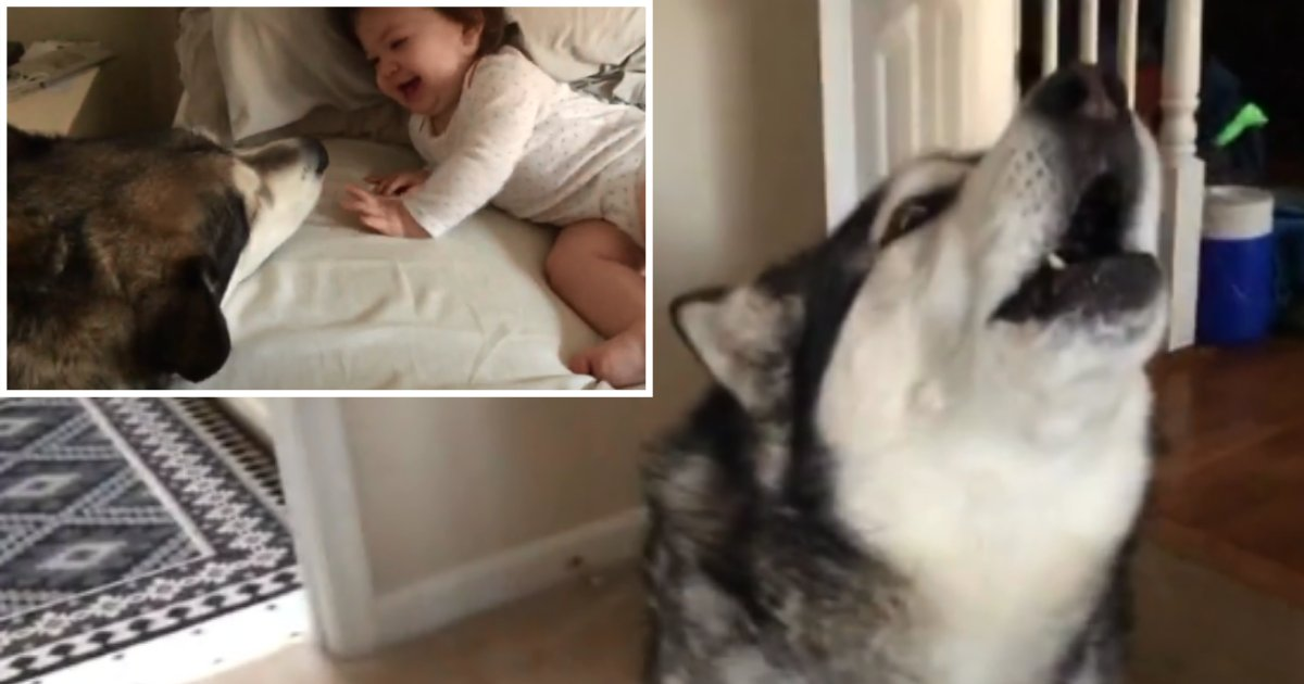 2 55.png?resize=300,169 - Dog Can't Stop Making Cute Baby Laugh