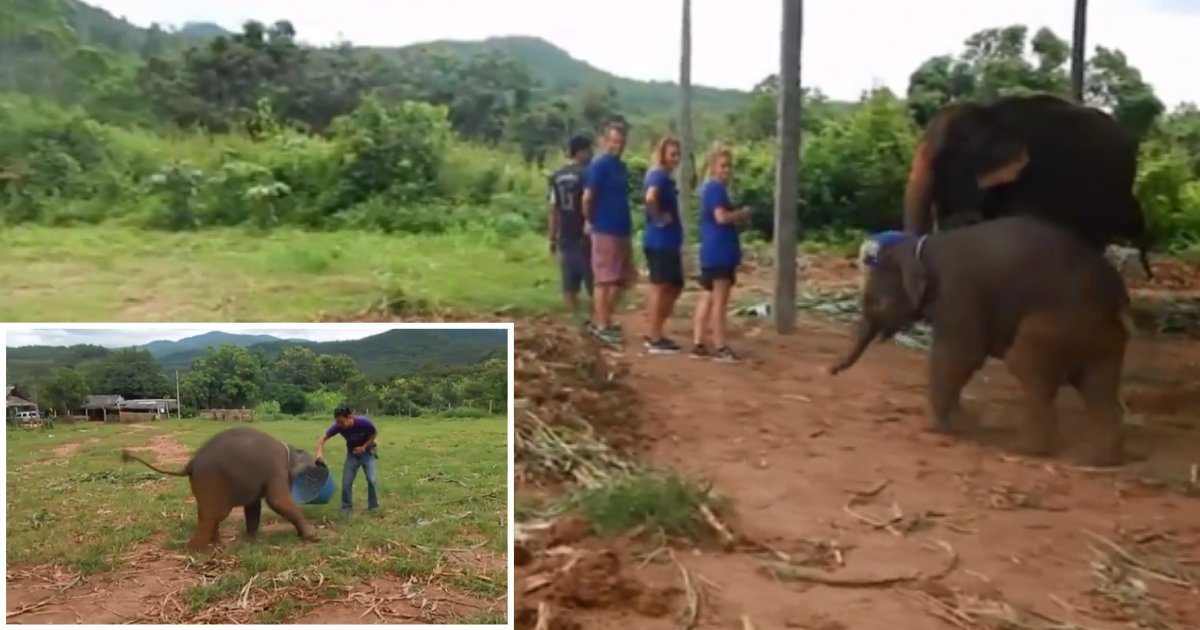 2 8.png?resize=1200,630 - Rare Footage Captured A Six-Month-Old Baby Elephant Laughing