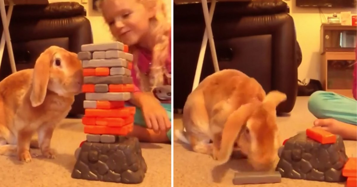 2.png?resize=1200,630 - Adorable Bunny And Little Girl Enjoy Playing Jenga Together