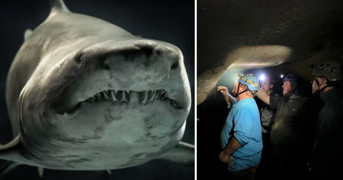 4 1.png?resize=1200,630 - 330 Million Year Old Shark's Massive Head Was Found In Kentucky