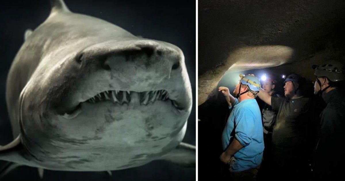 4 1.png?resize=412,232 - Découverte extraordinaire: Une tête de requin fossilisée de 330 millions d'années a été trouvée dans le Kentucky