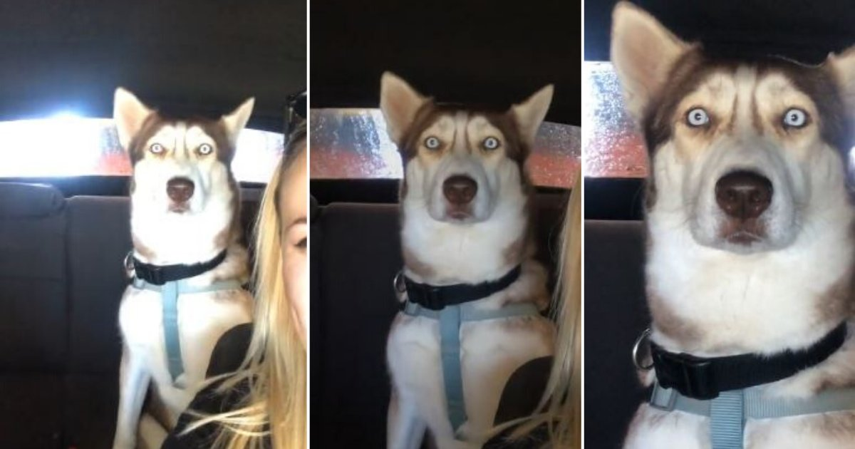 4 45.png?resize=412,232 - This Dog Is In Disbelief During Mystifying Car Wash