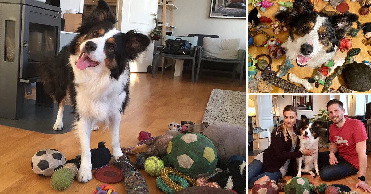 4 94.jpg?resize=412,232 - Six-Year-Old Border Collie Learned The Names Of 90 Toys, And She Could Identify Them On Command