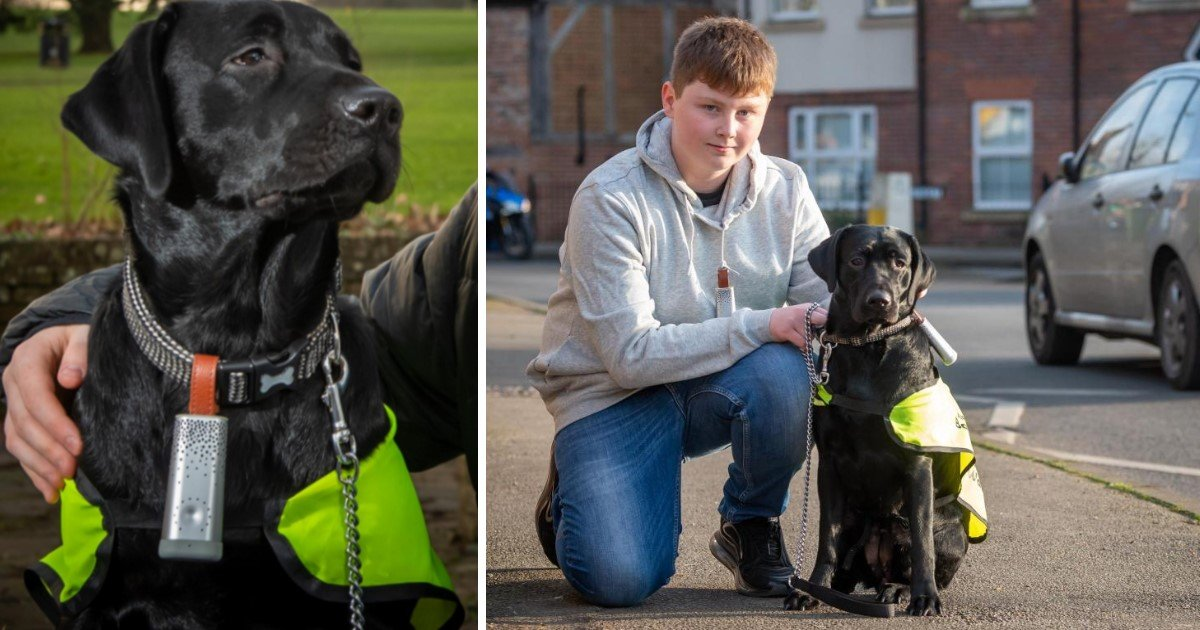 5 39.jpg?resize=1200,630 - Labrador From The UK Became The First Dog To Help Fight Air Pollution
