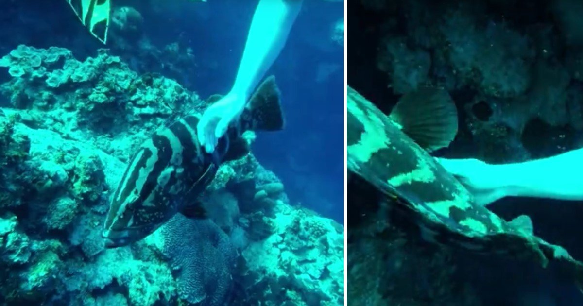 5 6.jpg?resize=1200,630 - A Large Grouper Fish Approached Scuba Divers In Deep Sea