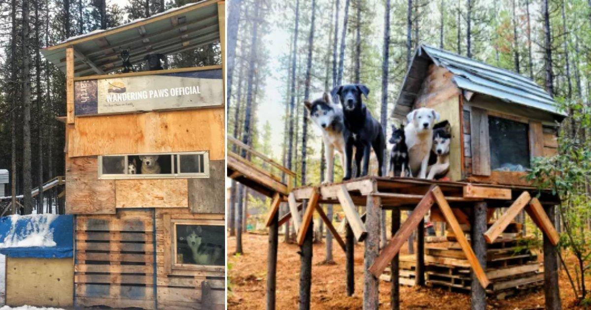 6 20.png?resize=412,232 - Un couple a construit un superbe palais de 3 étages pour leurs chiens