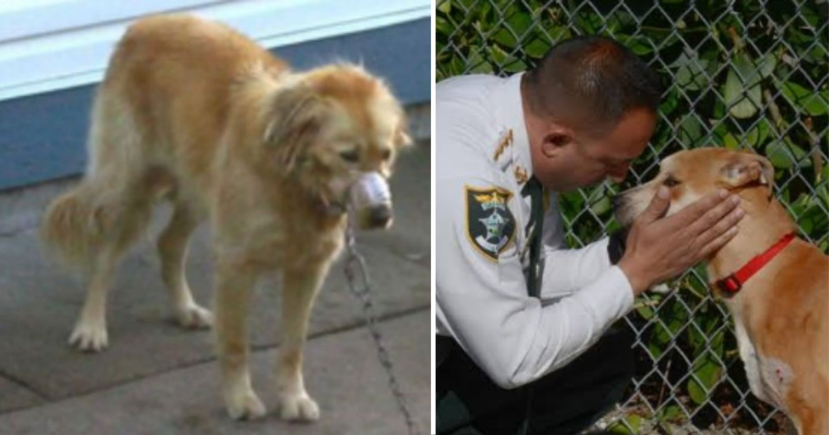 9.png?resize=1200,630 - Cruel Dog Owners Had Their Golden Retriever Chained With His Mouth Locked With Duct Tape