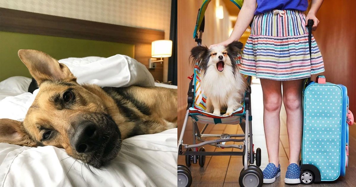 a hotel in mississippi allow guests to adopt dogs during their stay.jpg?resize=412,232 - A Hotel In Mississippi Allow Guests To Adopt Dogs During Their Stay